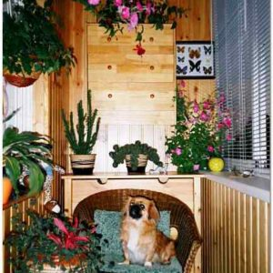Цветы на балконе: как красиво оформить балкон цветами