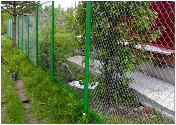Натяжной забор из сетки рабицы фото