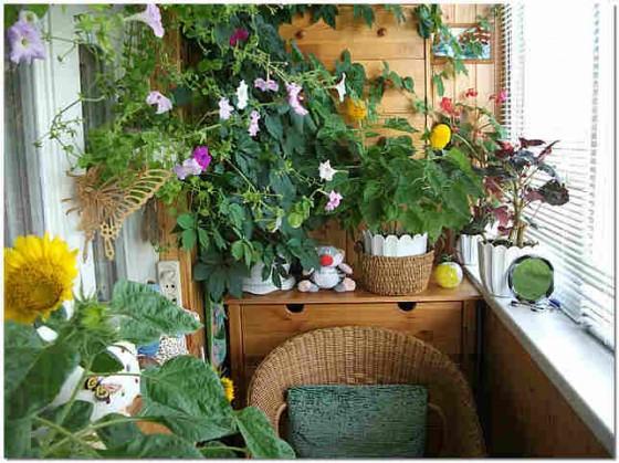 Интерьер балкона с цветами