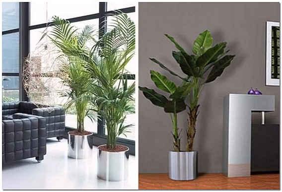 Комнатные растения в современном интерьере фото