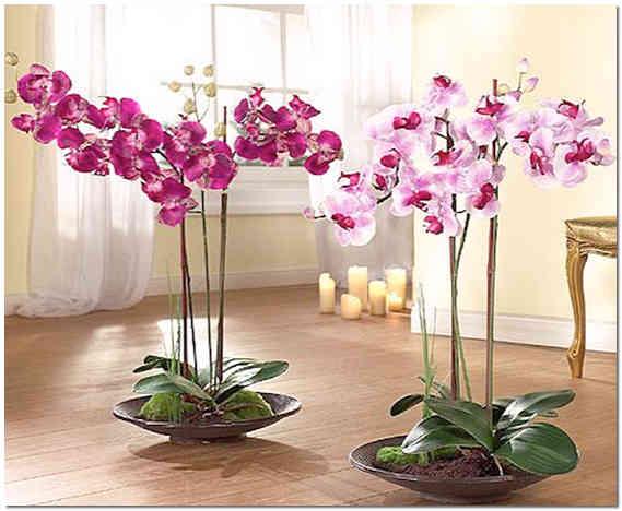 Высокие цветы для дома фото